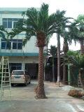 庭の装飾のための人工的な装飾的なナツメヤシの木