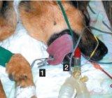 Oxímetro Handheld veterinario del pulso de Meditech
