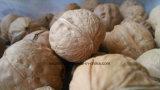 Наиболее востребованных орех с Shell