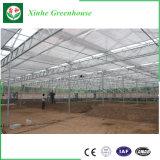 Invernadero conectado canal de la película para el Seeding/plantar