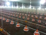 Ligne alimentante matériel de poulet de matériel de ferme avicole de grilleur d'approvisionnement d'usine