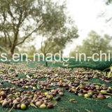 عذراء [ب] حصاد شبكة زيتونيّ اللّون مع مواد [أوف] ([يهز-هون02])