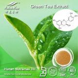 100% чистого экстракт зеленого чая (чай Polyphenols 20%~98 %, 20 % Catechins~80%, EGCG 10% ~50%)
