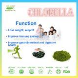 Hochwertiges Massenalgen-Chlorella-Puder