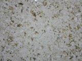 Слябы камня кварца надувательства хорошего качества популярные