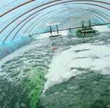 Порошок Spirulina самого лучшего качества естественный органический