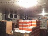 Vegetal do quarto frio, quarto do congelador do quarto de armazenamento