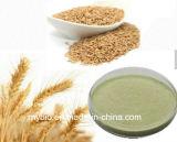 Reine natürliche organische Außentemperaturen Auszug, Beta-Glukan 20%~70%