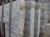 Tuiles de marbre blanches d'Arabescato Vagli
