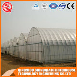 Agriculture Indoor Growing Tent Film en plastique Green House