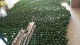 Plantes et fleurs artificielles de la centrale succulente Gu-SD0371