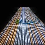 Super maakt Helder van de Prijs van de fabriek Kleur 4 in Één LEIDENE 5050 24V LEIDENE van RGBW Strook waterdicht