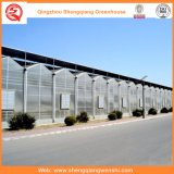 Земледелие/коммерчески парник хоббиа поликарбоната с системой вентиляции
