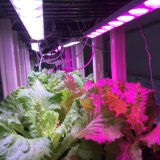 선호하는 식물 성장 가득 차있는 스펙트럼 LED