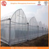 Landbouw/de Commerciële/Plastic Groene Huizen van de Tuin met KoelSysteem