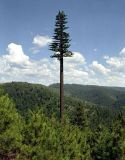 Verkleideter Baum-Telekommunikationssignal-Aufsatz