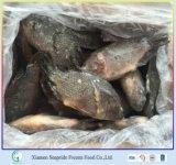 Hete Bevroren Tilapia van het Overzeese Voedsel van de Verkoop Vissen