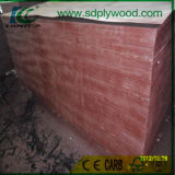 Le bon film sablé a fait face au contre-plaqué/au bois de construction/aux matériaux de Buildming pour la construction