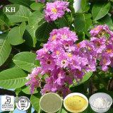 혈액 포도당 관리를 위한 Banaba 잎 추출 Corosolic 산 1%-98%