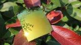 Lunettes colorées Polarized Tac Lens Lunettes de soleil Lens (T Golden Yellow)