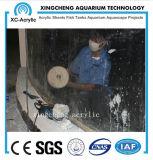 Proveedor de acuarios de acrílico transparente