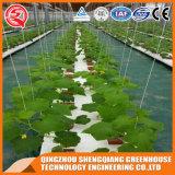 Landbouw Film Green House voor Groenten / Bloemen