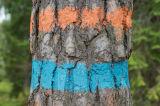 木のマーカーのスプレー式塗料の木製のマーカー、蛍光性のマーキングのスプレー式塗料