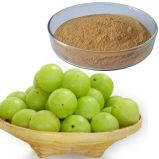Amla Frucht-Auszug-Gerbsäure-Puder
