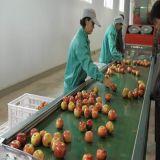 Chinese Goede Kwaliteit Heerlijk Vers Apple & Lage Prijs (FUJI Apple)