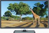 23.6 pouces DEL TV (24L31)