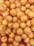 Esportazione del pomelo fresco di Globalgap HACCP