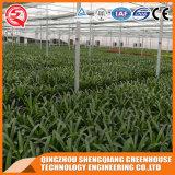 중국 다중 경간 식물성 꽃 강철 프레임 PC 장 온실