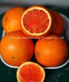 Frais pour l'exportation Tarocco Orange sanguine
