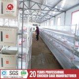 Ein eines-Tag-alt Küken-Rahmen für Baby-Geflügelfarm