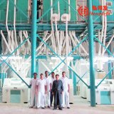 50tpdムギの製粉機械