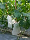 PP Spunbond Nonwoven Breathable Plant Protection Cover 또는 Banana Protecion Bags