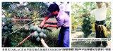 [أونيغروو] تربة سماد لأنّ أيّ ثمرة يزرع