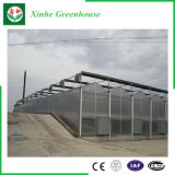 De tuin/het Landbouwbedrijf/het Groene Huis van de Film van het Polyethyleen van de multi-Spanwijdte van de Tunnel voor namen/Aardappel toe