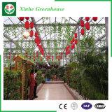 野菜か花を植えるためのパソコンシートの温室を耕作する