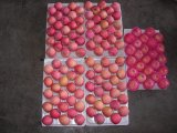 Venta bien fresca Roja Manzana Fuji