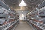 Xinguangzheng является проектирование дома на куриное мясо