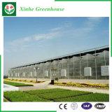 Serre chaude en verre de système hydroponique de Muti-Envergure pour l'agriculture