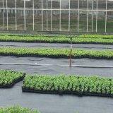 Prodotto nero intessuto pp della stuoia di controllo di Weed