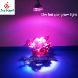 طاقة - توفير [12و] [إ27] [لد] ينمو تكافؤ ضوء, جيّدة [لد] بصيلة لأنّ ينمو