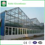 Design moderno de vidro/estufa pl/ Multifunctional gases com efeito de estufa de Aço/luz.