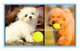 Haustier-Spielzeug. Hundespielzeug, Katze-Plüsch-Spielzeug