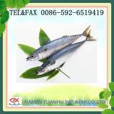 De kleine Vissen van de Makreel van de Grootte Overzees Bevroren Vreedzame