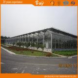 장기 사용 경간 광대하게 이용된 Venlo 유형 유리 온실