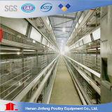 H Type Automatique Agriculture Machines agricoles pour couche poulet à poulet