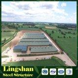 Casa de aves de corral de acero de bajo costo de la construcción de la granja avícola